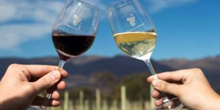 proponen un camino del vino con 14 bodegas a lo largo de 100 kilometros