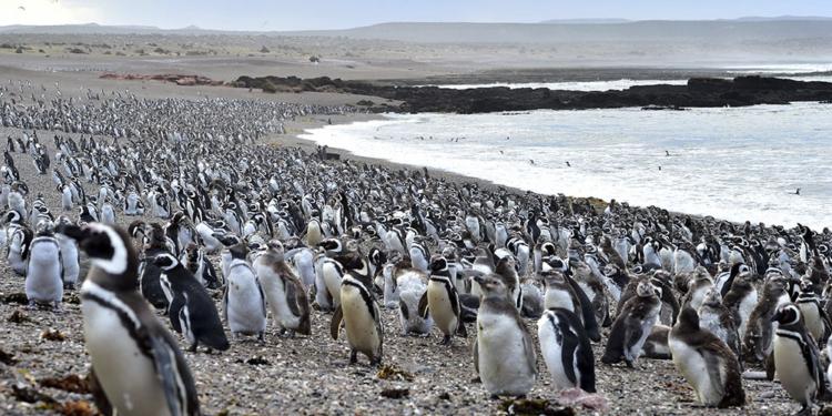 con la llegada de los primeros pinguinos se abrio al turismo la reserva de punta tombo