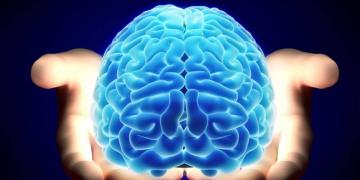 cientificos descubren una proteina que permitiria borrar los malos recuerdos